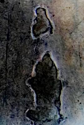 CM180510-205718003 (2) (269x400).jpg