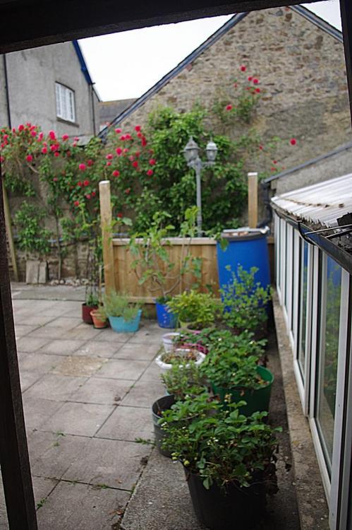 Back garden 1 Red.JPG