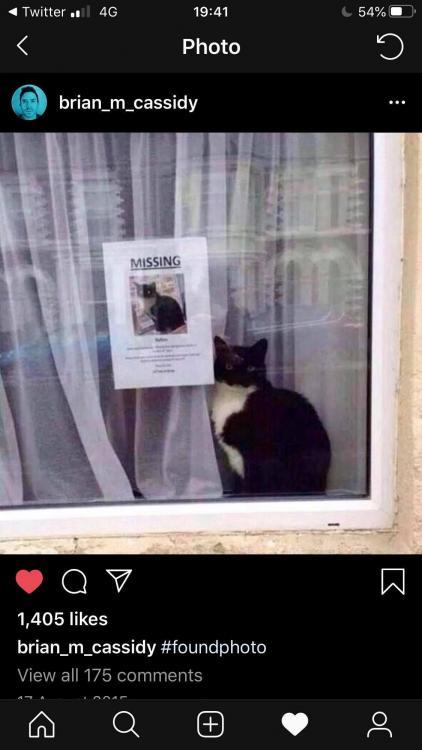 missing cat.jpg