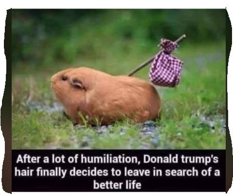 donald trump's hair.PNG